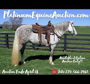 Place your bids at www.PlatinumEquineAuction.com beginner safe, stout built, and gentle for any rider on trails! Family Horse! Smooth Gaited!!!