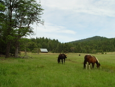 Mountain Horse Ranch For Sale Near Redding Ca.