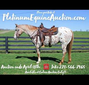 Place your bids at www.PlatinumEquineAuction.com Fancy ranch horse, big stout and broke on trails or around the ranch!