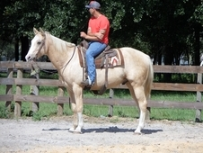If you are looking for a speed horse, HE IS NOT THE ONE! Slow and...
