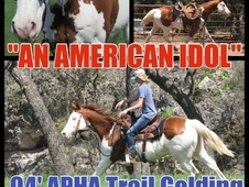 VIDEO! ! FANCY Chestnut Overo 16 hh Trail Gelding