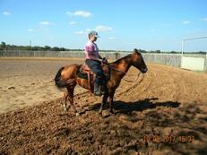 Rabbit - Perfect Riding Bay Gelding