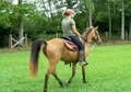 Natural gaited Buckskin filly