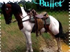 Beautiful Beginner Broke Trail Horse~Trail Master!