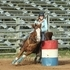 3D/4D Barrel and Game show Gelding