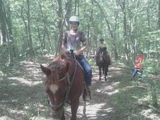 SAFE , SANE HORSES FOR LEASE $250. MO.