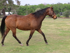 Restless Holiday 2004 broodmare for sale Double Honor