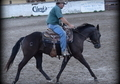 AQHA Black gelding, Roping, Ranch, all around prospect
