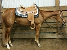 3 YO APHA SB Filly - Invitation To Tawny FOR SALE