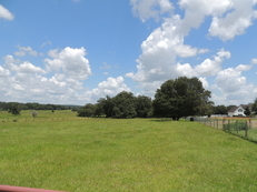 50 Acre Ranch - FOR SALE BY AUCTION