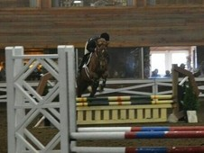 5 yr old TB gelding very athletic and versatile