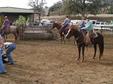 AQHA Mare for sale or trade