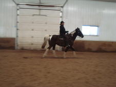 Gaited Black & White Spotted Saddle Horse