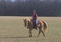 Gorgeous Golden Palomino TWH Trail Mare