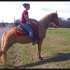 Gorgeous Registered Golden Palomino TWH Trail Mare