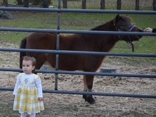 "Miniature Horse 35"" and Kid Friendly"