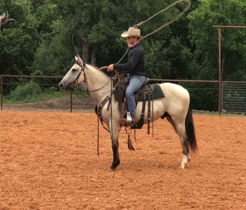Super cute buckskin gelding