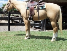 ABSOLUTELY STUNNING! A real sweetheart! Super personalty! Rides e...