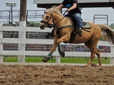 Palomino Mare for Barrels or Trail