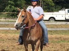 Pee wee barrel pony for sale