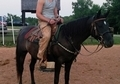 Black SE Arabian Mare - good on trails, great producer