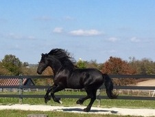 Beautiful Imported Fairytale Gelding