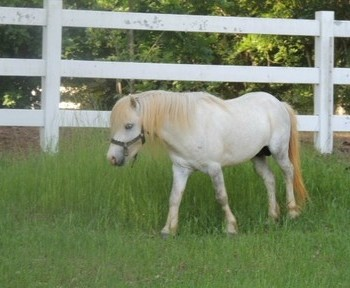 Horses for sale in Alabama | HorseClicks