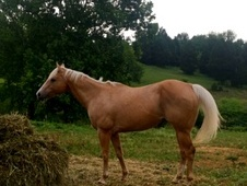 Bombproof kid safe gelding!