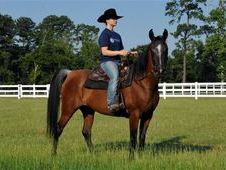 Sweet mannered mare for sale