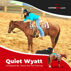 QUIET, Sound, safe and sane make this trustworthy mount one you want in your barn! Take him on a trail ride, cow sorting, team penning, roping or to an obstacle clinic, he won't let you down!