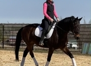 Light and fun dressage horse!