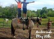 Place your bids at www.PlatinumEquineAuction.com beginner safe ranch horse, stout and gentle for any rider on trails or around the ranch!