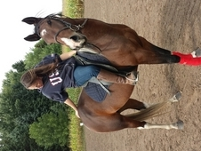 Mounted Posse Mare * price reduced *