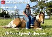 Place your bids at www.PlatinumEquineAuction.com beginner safe trail horse, big stout and gentle for any rider on trails, neckreins, lopes!