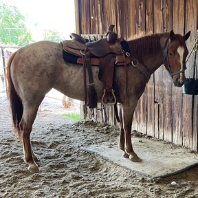 Horses For Sale In Texas Horseclicks