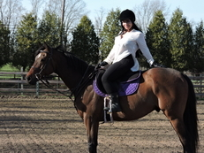 Beautiful 9 year old Thoroughbred Gelding - Rides English and Western