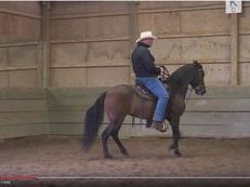 Flashy 7 Year Old Paso Fino Mare with great bloodlines - Beginner Friendly