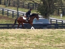FULL VIDEO-Gorgeous classy Gelding-Sold