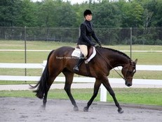 GORGEOUS GELDING FOR SALE!
