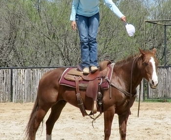 Team Roping Horses for sale in Texas | HorseClicks