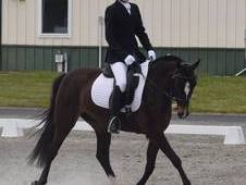 Registered Welsh Dressage;Jumper;Eventing Pony