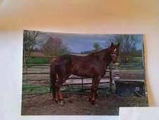 Handle's well as stallion. 8th foal crop 2017. Winners at track, ...
