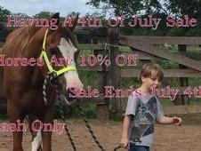 All Horse Are 10% Off