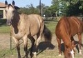 Pair of Trail Horses-