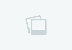Bronze and black double ear show headstall