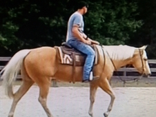 BIG! STOUT! GENTLE! VERY HANDSOME AQHA Palomino gelding.