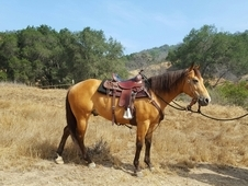 Street safe, trail horse