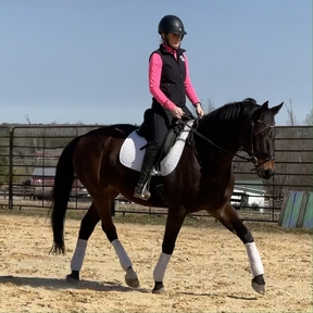 Fancy moving dressage horse with upper level potential