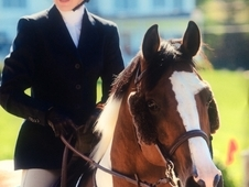 11 year-old, 15. 1 hand, German Riding Pony Gelding - Jumper