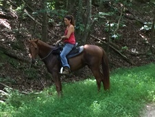 5 y. o. Tennessee Walker Mare